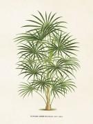 Poster vintage palm, 18x24 cm Sköna Ting