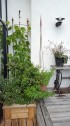 Växtstöd väggställning halvrund two faces of sweden