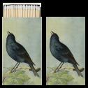 Tändsticksask - Tändsticksask fåglar