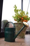 Vattenkanna GardenMind oval m stril 4 liter mörkgrön