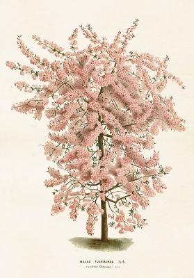 Poster vintage rosa träd, 70x100 cm Sköna Ting - Poster vintage rosa träd, 70x100 cm Sköna Ting