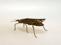 Insekter i rost Wikholm Form - Skalbagge