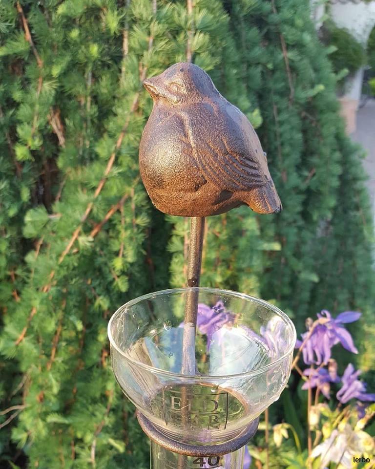 regmätare fågel