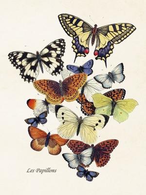 Poster vintage fjärilar nytt motiv, 18x24 cm Sköna Ting - Poster vintage fjärilar nytt motiv, 18x24 cm Sköna Ting