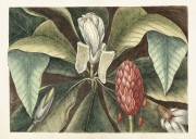 Poster vintage magnolia ny, 70*50 cm Sköna Ting