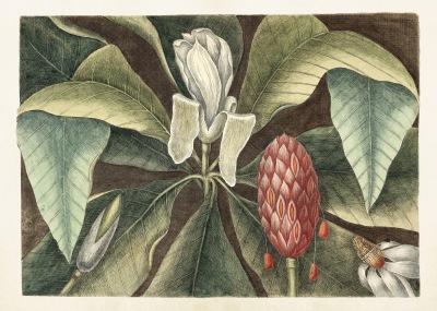Poster vintage magnolia ny, 70*50 cm Sköna Ting - magnolia, 70x50 cm Sköna Ting
