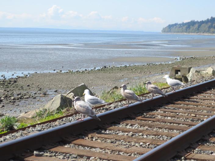 Längs med White Rock beach går tågrälsen som förbinder Vancouver med Seattle.