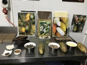 Vi fick lära oss om chokladtillverkning.