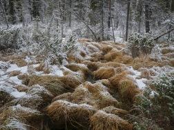 First Snow in Muddus av Serkan Günes