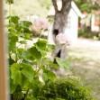 Förråd och redskapsbod Dellas Garden Canterbury 3 VIT med rött tak-3, Förråd. Snygga, fina och snyggt förråd från svensktillverkade Della´s Garden. Ett förråd med många tillval, samt lekstugor och sn