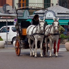 Häst och vagn i Padova.