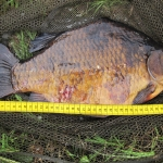 crucian_1874gram_42cm_july2014_right_side