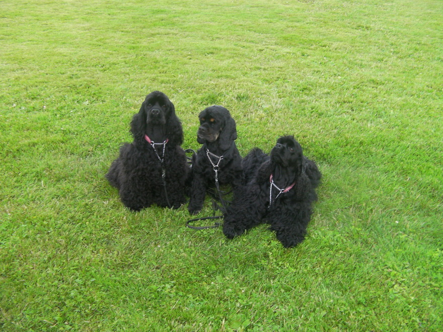 Vill du ta med ditt husdjur på semestern i Halland? Vi har rum för dig med hund & husdjur hos oss på Björkängs Vandrarhem mellan Varberg & Falkenberg