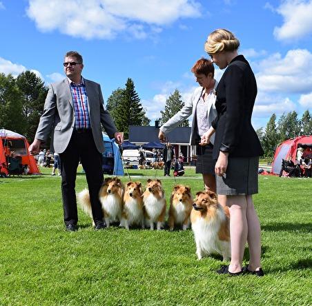 Laipo's 2 HP Avelsklass Hugo, Ärtan, Luna, Lycka och Emma