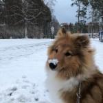 Empericals Eye In The Sky ''Oxy'' Född:2020-03-24 Ägare: Emma Danielsson i Umeå.