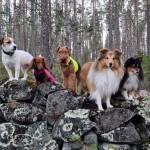 Empericals Ready To Run ''Totte'' med sina hundkompisar. Ägare:Sara Andersson i Älvsbyn.