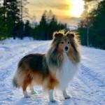 Empericals Silver Blaze ''Mille'' Ägare: Nina Henriksson i Gällivare.