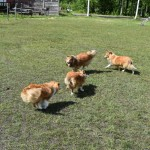 Leiah, Alice, Ozzy och Eira
