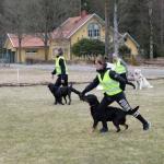 Utfall för oss och slalom för hundarna.