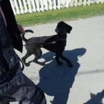 Millie tycker om Gympa med Hund