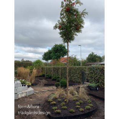 Villaträdgård_lantligt_planteringsplan