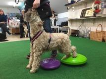 balansträning hundgymmet