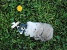 Dummy med kaninskinn