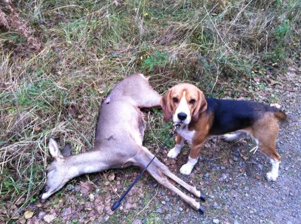 Zack på jakt, 1 år och 8 månader