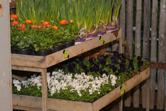 vårensförstablommor