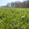 Kuskagräsjord - Kuskagräsjord i storsäck/ton
