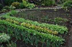 Kuskamatjord passar bra i trädgårdslandet