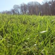 Kuskagräsjord