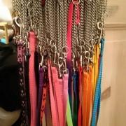 Halsband med koppel