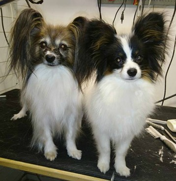 Kira och Svenne
