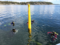 Förväntansfulla dykare snart påväg ner