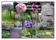Idékollage Modern trädgård med lummighet i rader
