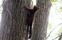 En ekorre i trädet utanför var nyfiken på oss