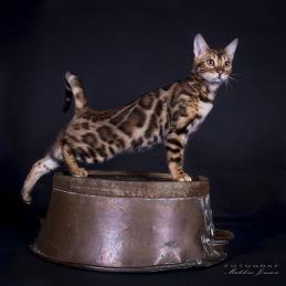 SE*Wildcatsstars Loved Avicii, Ben n 24.SVERAK LO 354089. Ägare PäiviBärgård