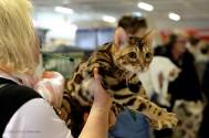 Wildcatsstars Loved Avicii,  BEN n 24. Ägare: Päivi Bärgård