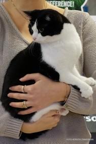 Lucy, HCS n 03, svart huskatt. Ägare: Daniella Schöner