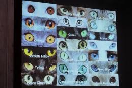 Bild från Annas föredrag om ögonfärger.