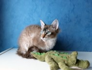 S*Blå Katten Plopp,LPL n 21 32 SVERAK RX 356242 Ägare: Monica Lagerquist