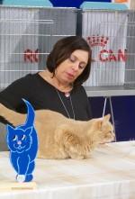 Domare Anna Wilczek. Kat. 2, 4, huskatt & senior