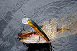 Fishing Sweden pike