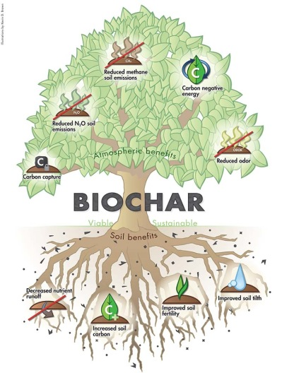 biochar definition explained