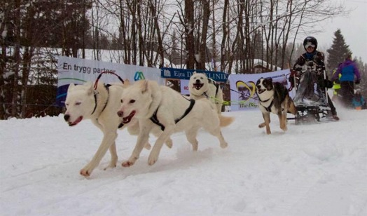 4-spann Polarhundsmästerskapen 2016