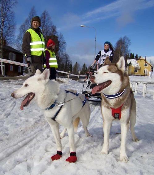 Andra slädtävlingen 2-spann SM i Norråker. Light (då ägdes hon av Jonas Nilsson) och Zero.