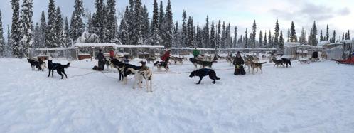 Ivriga hundar redo att springa