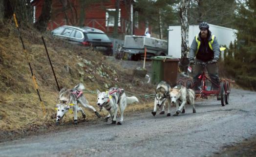En typisk start hemifrån vår gata, där första kilometern oftast är den mest händelserika. Kit och Sally i led, Ratchel och Turbo i wheel.