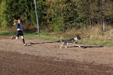 Under sommarhalvåret kör jag även en hel del löpning med hundarna, perfekt att träna kommandon